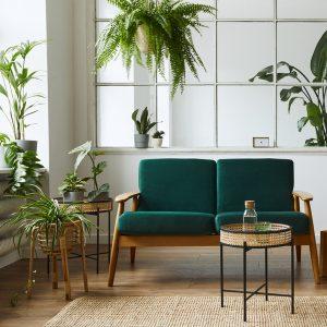Keep plants near window